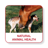 Natural Animal Health